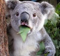 surprised-shocked-animals-funny-6__700_Rookk